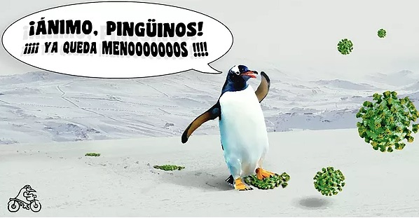 Imagen de pingüinos 2021 animando