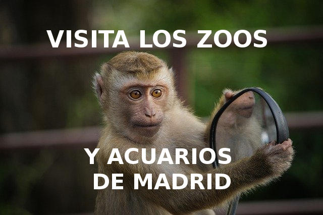 entradas zoo madrid
