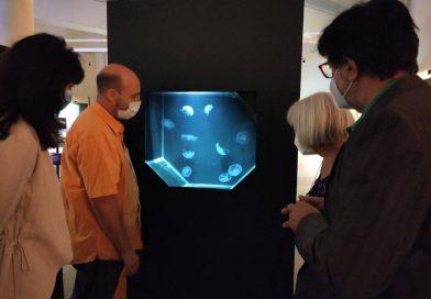 'Transparentes. Vida de cristal' medusas