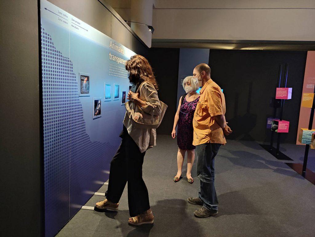 Exposición Transparentes. Vida de cristal